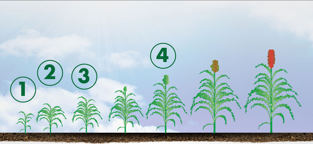 Sorghum Application Header