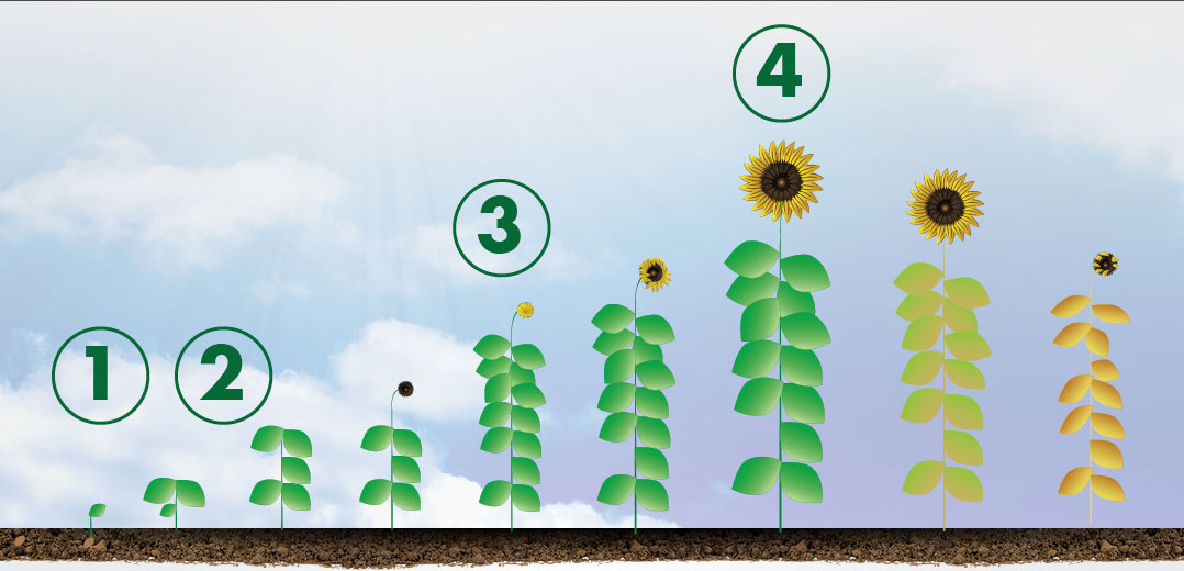Sunflower Application Header